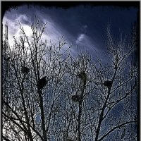 Ворона и Небо :: Aggel