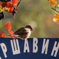 Что год грядущий готовит Андрею Аршавину   №5 :: Вячеслав