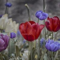 Красота...спасет мир!!! :: Александр Вивчарик