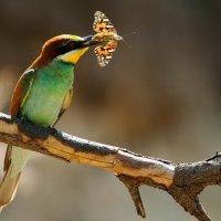 Охота на бабочек :: Сергей Изюмченко