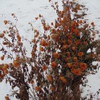 зимние цветы... :: Просто witamin