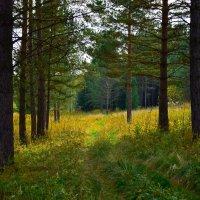 Осенний лес :: Sied Art