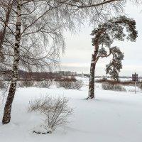 Долгожданная зима. :: Евгений Никифоров
