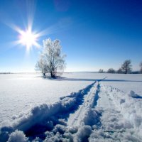 Вставай на лыжи!!! :: Константин Филякин