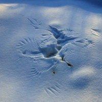Следы на снегу :: Николай Сапегин