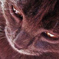Кошечка :: Наталья ХХХХХ