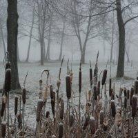 Туманный вечер в буферном парке. :: Харис Шахмаметьев