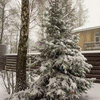 наконец снег! :: Галина Петрова