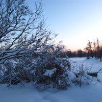 Зимний день :: Самохвалова Зинаида