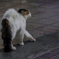 Ой мамочки и чё счас будет!!!-из серии Кошки очарование мое! :: Shmual Hava Retro
