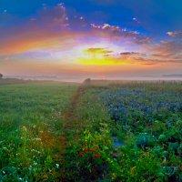 красота раннего утра :: юрий иванов