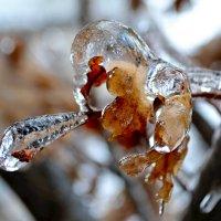 В ледяном плену :: Nina Streapan