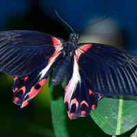 Бабочка :: Ростислав