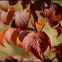 осень :: victor leinonen