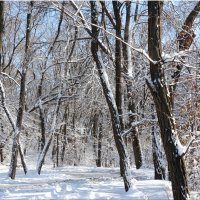 Зима в начале декабря...4 :: Тамара (st.tamara)