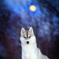 Одной лунной ночью :: Ершов Андрей