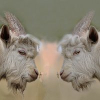 два козла :: алекс дичанский