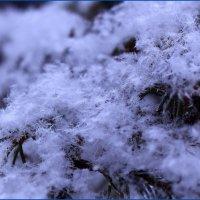 Красоты матушки-зимы :: Татьяна Ломтева
