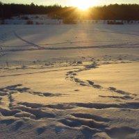 IMG_8480 - Солнце садилось :: Андрей Лукьянов