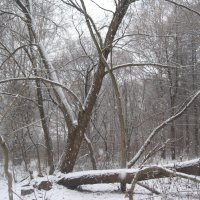 В лесу :: Джулия К.