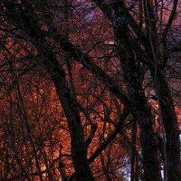 Загадочный лес :: Елена Даньшина