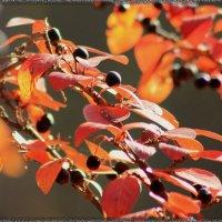 вот и осень наступила :: victor leinonen