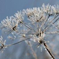 Зимний цветок. :: Тамара Бучарская