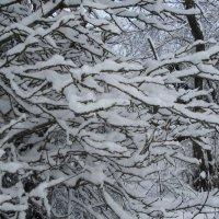 Снежные веточки :: BoxerMak Mak