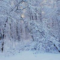снежный пейзаж :: Сергей Швечков