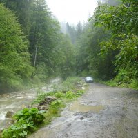 Река  и  дорога  в  Карпатском  лесу :: Андрей  Васильевич Коляскин