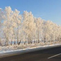 морозное утро :: NIKOLAY Nagaev