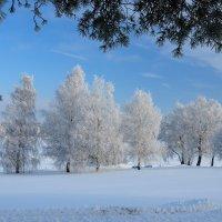 под Новый год :: Андрей Куприянов