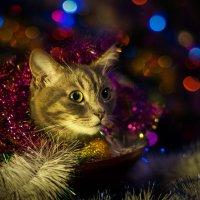Кошачье новогоднее :: kram