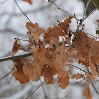 Листья на ветру....... :: Tatiana Markova