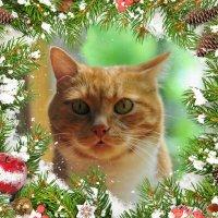 Друзья с Наступающим, Новым 2015 годом!!! :: Виталий Виницкий