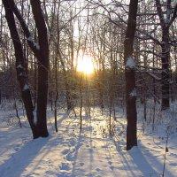 IMG_8639 - Настроение новогоднее :: Андрей Лукьянов