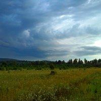 Перед дождём. :: оксана