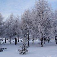 Деревья покрыты инеем, словно серебром :: Николай Дони