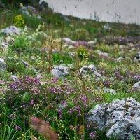 Камни и цветы :: Андрий Майковский
