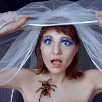 Свадебный паук :: Яна Шудра
