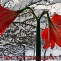 С  НАСТУПАЮЩИМ ! В Харьков пришла зима. Вид из моего окна :)) :: Александр Резуненко