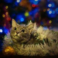 Кошачье новогоднее2 :: kram