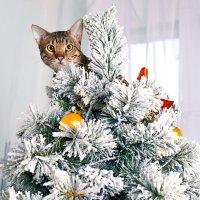 Здравствуй елка!!!  Новый Год!!!! :: Павел Новоселов