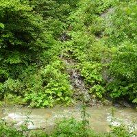 Горная  река  и  горные  потоки в  Карпатском лесу :: Андрей  Васильевич Коляскин