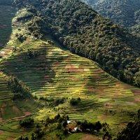 Угандийские огороды :: Евгений Печенин