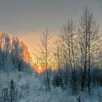 Рассвет в зимнем лесу :: Валерий Талашов