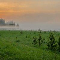Гармония утренней свежести :: Валентин Котляров
