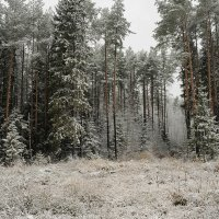 ноябрьский лес :: Galina