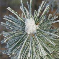Зима кудесница :: Swetlana V