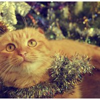 С Новым Годом! :: Viktoriya Bilan